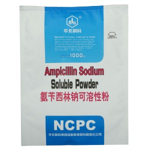 Ampisilin Sodium larut Powder